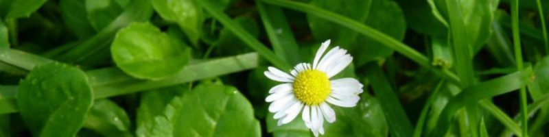 cropped-cropped-cropped-cropped-cropped-819260_10200765258000288_1665402429_o21.jpg