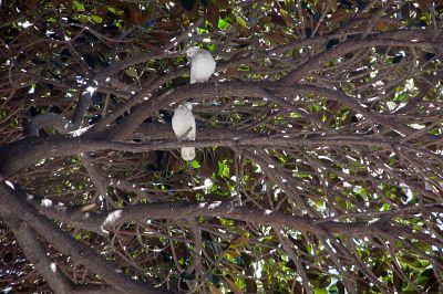 palomas árbol_opt